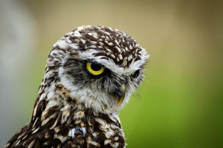 птица (фото eksmo.ru)
