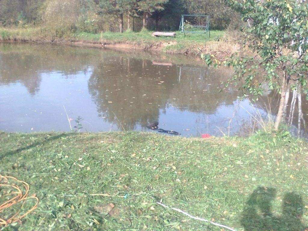 тело мужчины Зуева, 2.10.2020, Алфимово, искусственный пруд (фото фото vk.com id391159188)