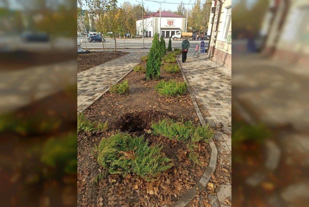 украденная туя, улица Николаева, октябрь 2020 (фото vk.com smolensk67)