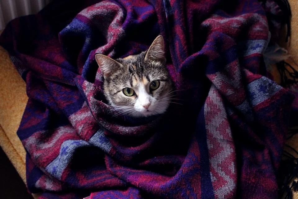 уют дом тепло холод