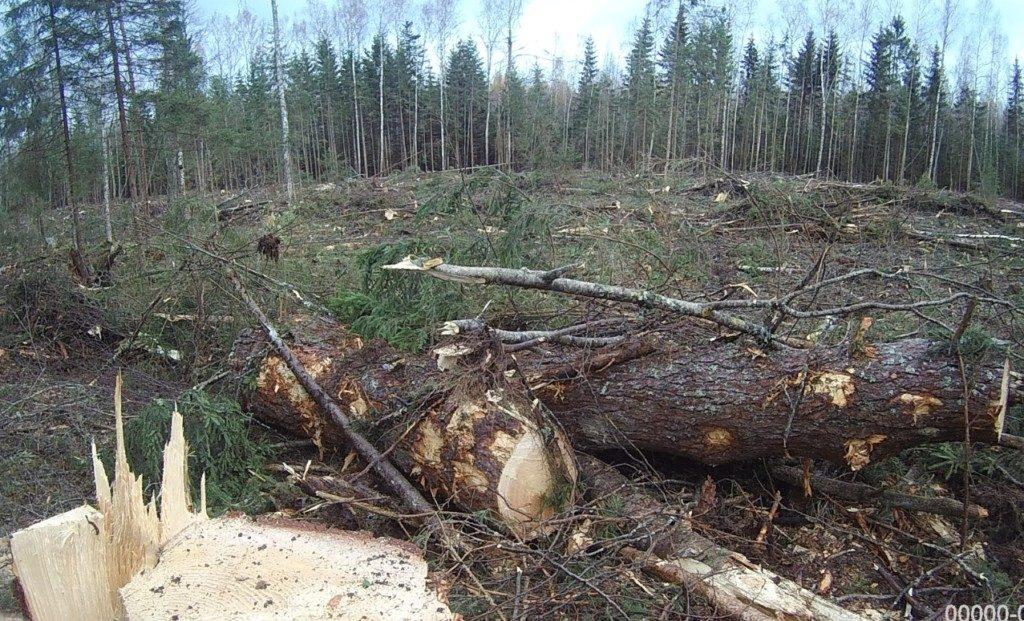лес вырубка рубка