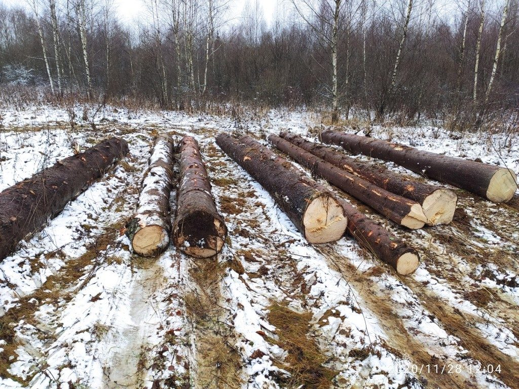 рубка леса незаконная