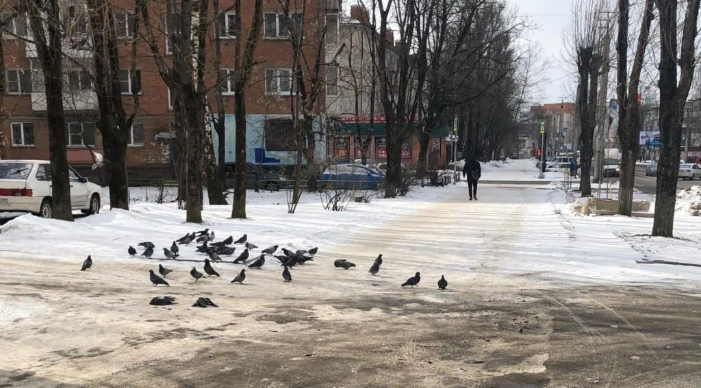 В Смоленске водитель иномарки переехал стаю голубей – соцсети