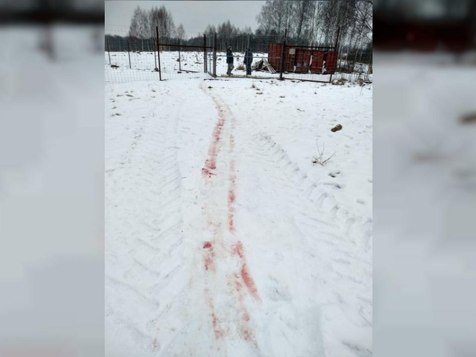 место разделки браконьерски добытого Европейского оленя в Велижском районе (кадр оперативное видео 67.mvd.ru)