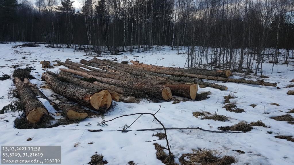 вырубка деревьев в Смоленском Поозерье, март 2021 (фото vk.com poozerye)