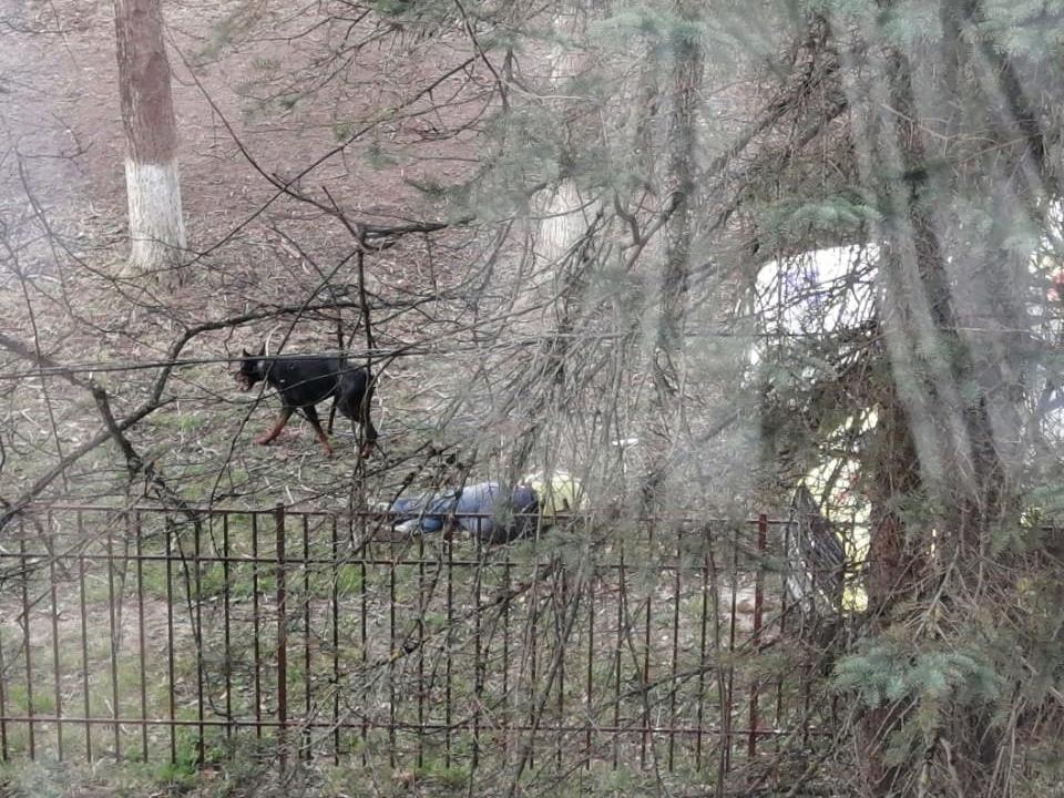нападение добермана 15.04.2021 на женщину в Гагарине возле школы №3 (фото vk.com gagarinlife)