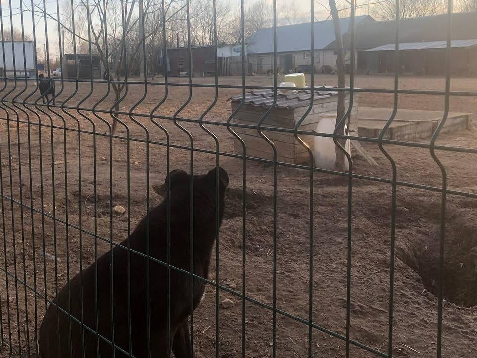 приют Верность, бездомные собаки (фото vk.com dogvernost)