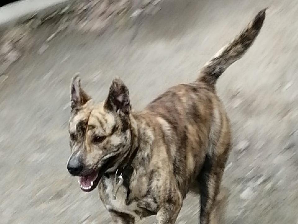 собака на детской площадке в Смоленске (фото vk.com black.smolensk)