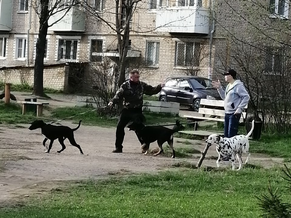 собаки без намордников 29.04.2021, Ярцево, 50 лет Октября, 14 (фото vk.com id598300333)