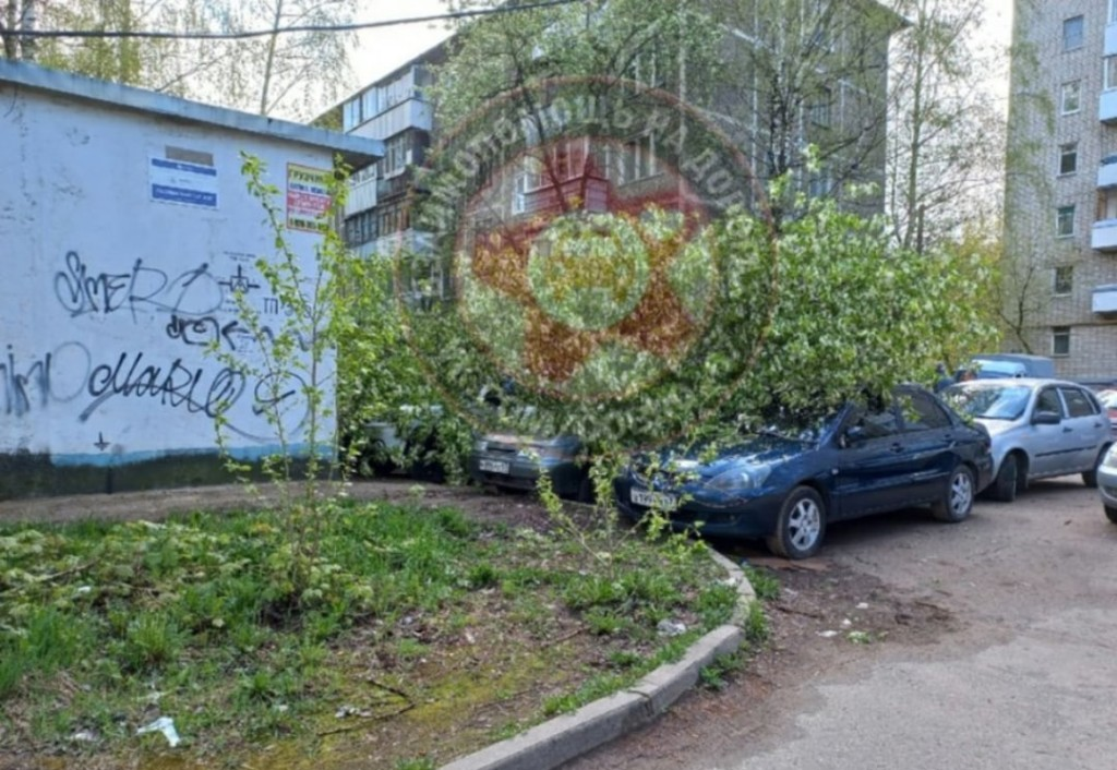 машина дерево