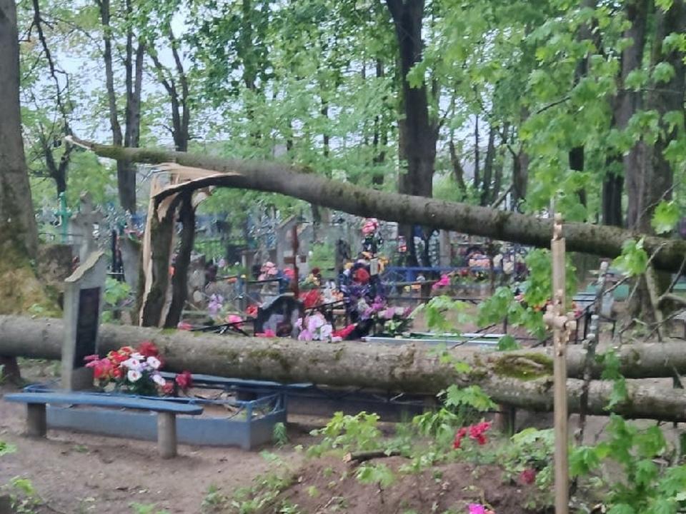 поваленные 19.05.2021 деревья на кладбище в Велиже (фото vk.com id413558683)