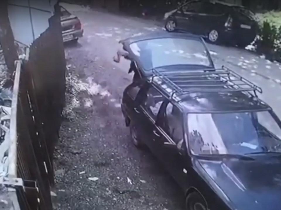 водитель Москвича, живодёр выбросил котят в пакете