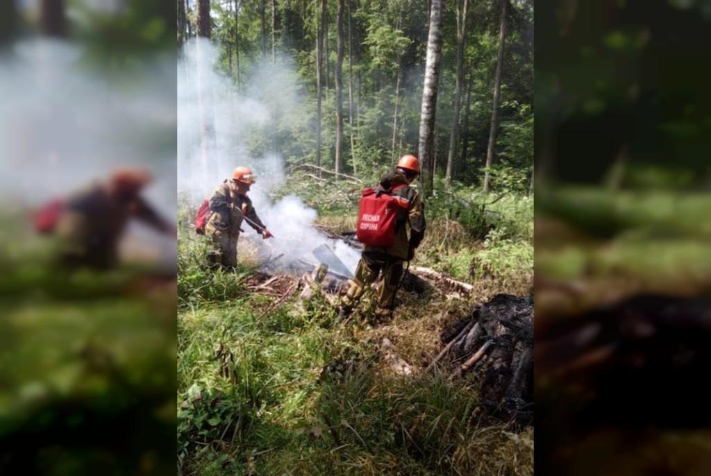 лесной пожар 23.06.2021 в Смоленском районе (фото лесопожарной службы региона)