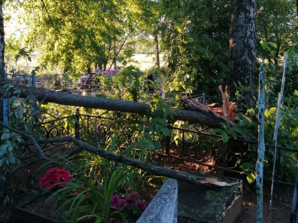 Елмановское кладбище 21.07.2021 закидано спиленными деревьями, Сычёвский район (фото ok.ru d.maltsevo)