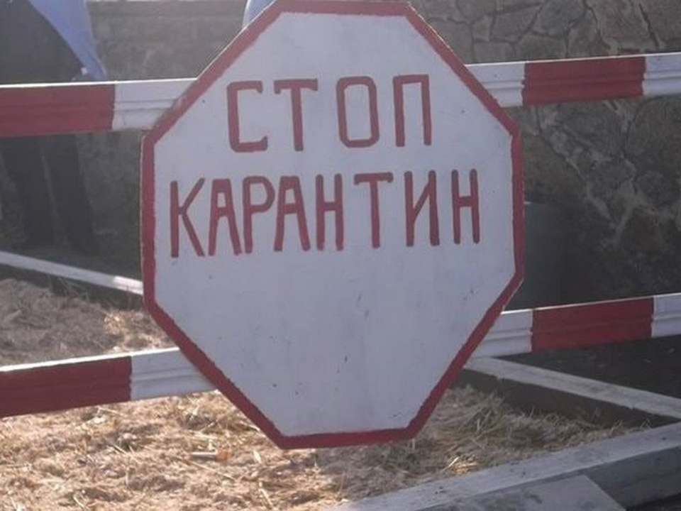 карантин, африканская чума свиней, въезд в Вадино (фото vk.com podslushanovsafonovo)