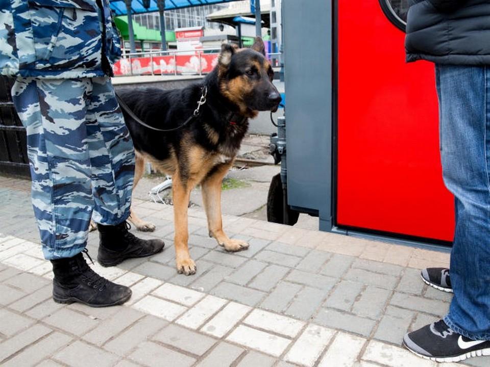 МВД, кинолог, служебная собака, поезд (фото пресс-службы МЖД)