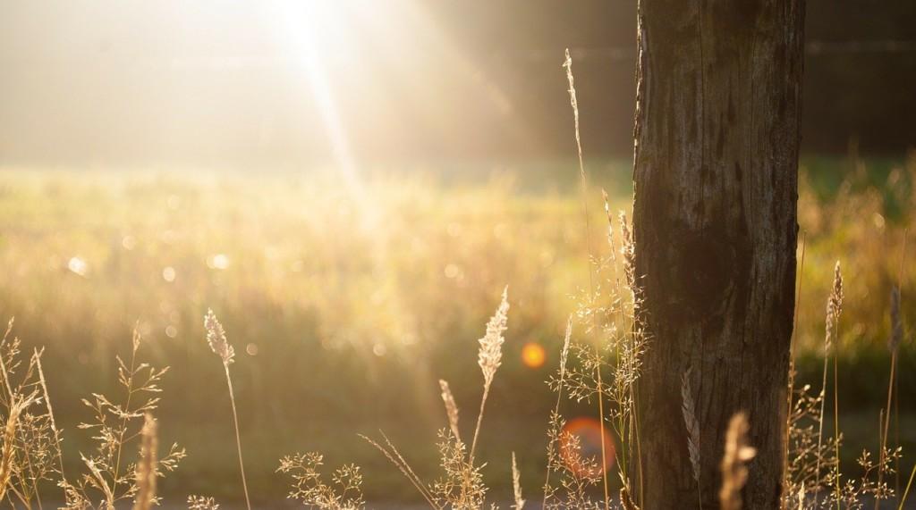 погода лето солнце трава