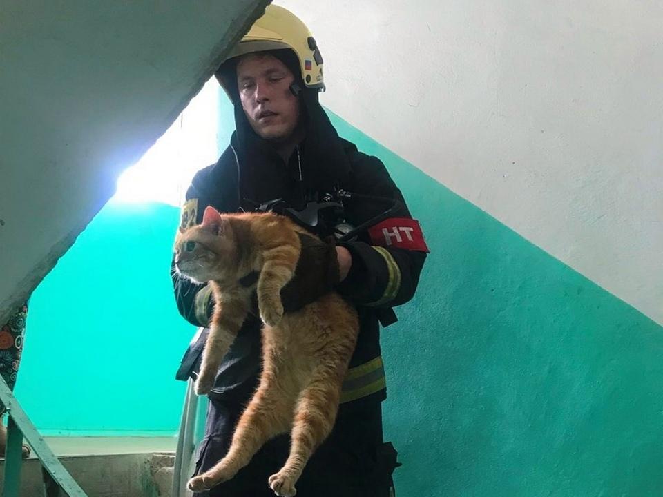 спасение кота из горящей квартиры 13.07.2021, улица Кирова (фото 67.mсhs.gov.ru)