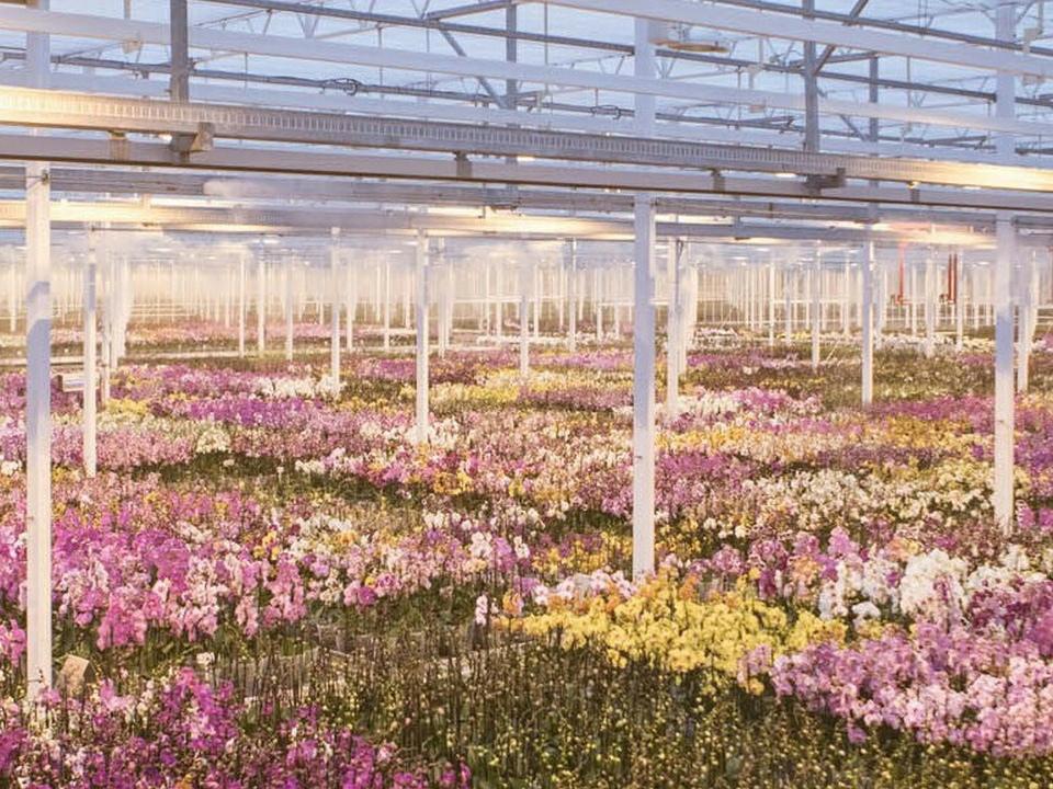 тепличный комплекс по выращиванию цветов