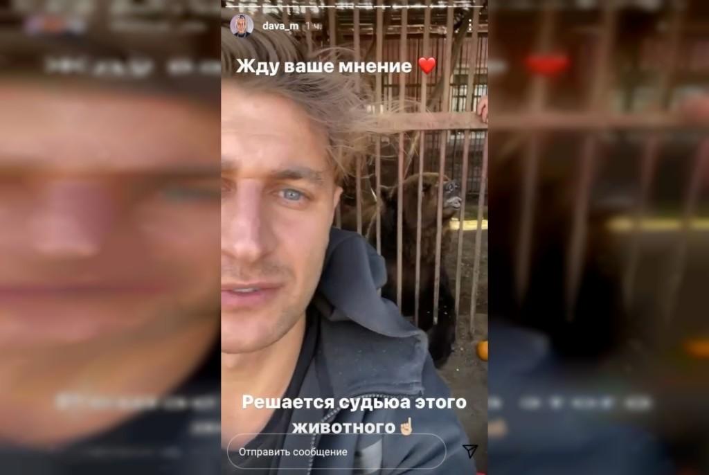 DAVA, медведь, клетка, Смоленская область (скриншот сторис instagram.com dava_m)