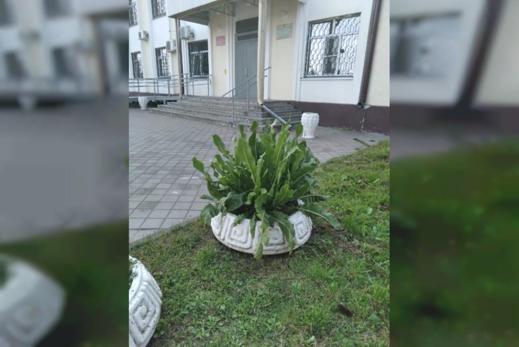 хрен на клумбе у входа в Гагаринское отделение ПФР (фото vk.com overheardgagarin)