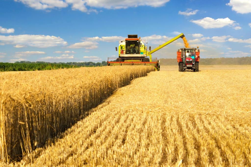 комбайн, уборка пшеницы (фото admin-smolensk.ru)