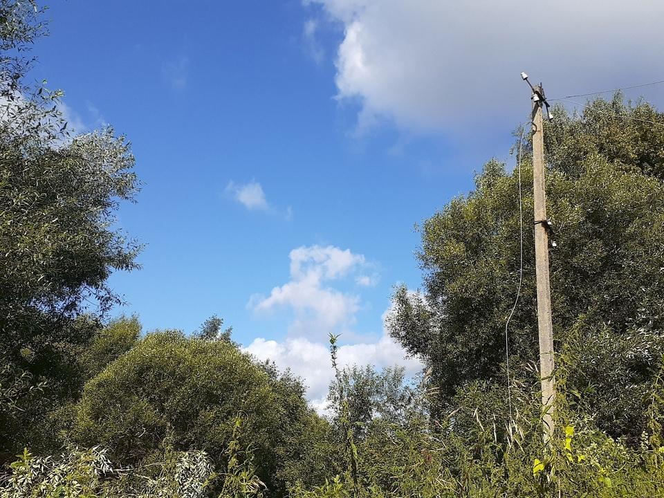 обрыв ЛЭП в результате падения дерева из-за непогоды 2.08.2021 в деревне Базылевка Починковского района (фото vk.com meteo67)