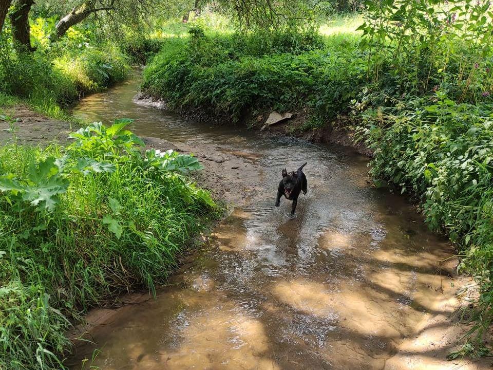 спасённая смолянкой собакой Кира, Реадовский парк (фото facebook.com profile.php id=100004473940799)