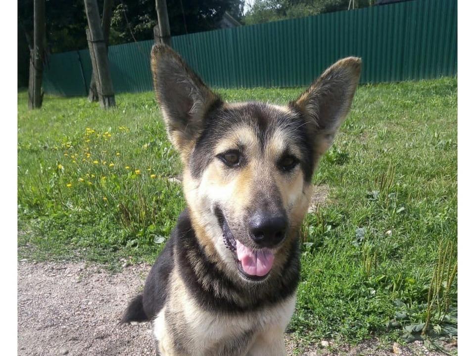 убитая Игорем Мудряковым собака (фото фото Ульяны Бекусовой, instagram.com smolensk_news67)