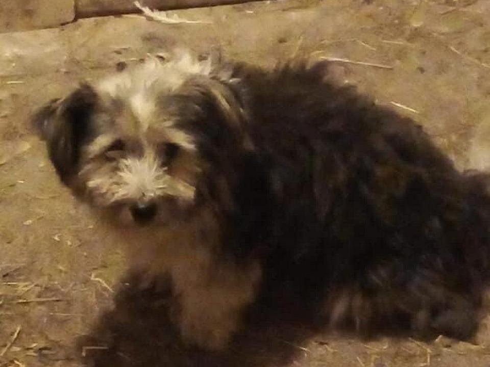 подобранный Неверовым в Вяземском районе пёс (фото ok.ru profile 594854347834)